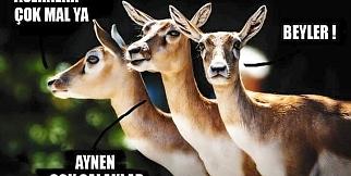 Hayvanlar Aleminden