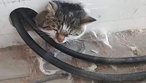 İnşaatta mahsur kalan kediyi itfaiye kurtardı