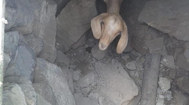 Su kuyusuna düşen keçiyi itfaiye kurtardı