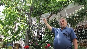 Bir ağaçta 7 farklı meyve yetiştirdi