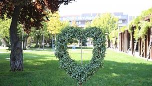 Dekoratif çiçek ve bitkiler BÜyükşehir'den