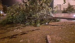 Fırtına ağaç devirdi bina girişi kapandı