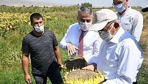 Kayseri'de ay çekirdeği hasadı başladı