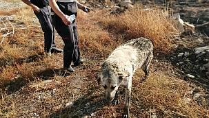 İtfaiyeden 4 saatlik köpek kurtarma çalışması