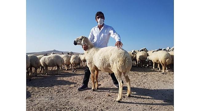 Müdürlüğü bıraktı, çiftçi desteğiyle sürü sahibi oldu