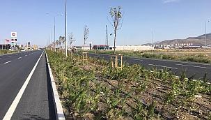 Şehrin batı girişine 62 bin fidan dikildi