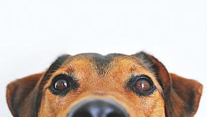 Kayseri'de köpek hırsızlığı iddiasına 5 yıl hapis
