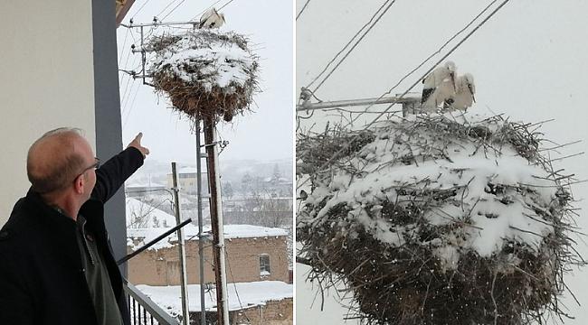 Kayseri'de leylekler kara hazırlıksız yakalandı