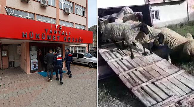 120 hayvanı tır ile çalan iki kişi yakalandı