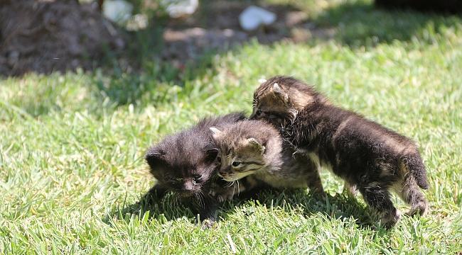 Annelerinin terk ettiği yavru kediler korumaya alındı