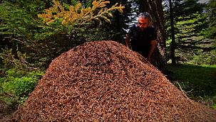 Karınca yuvalarının boyu 1 metreyi buluyor