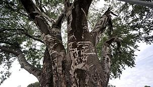 'Künye Ağaç'ı