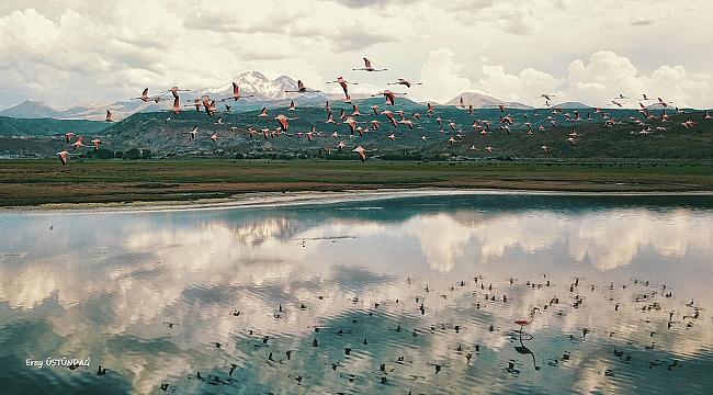 Sazlıktaki Flamingolar görenleri heyecanlandırdı