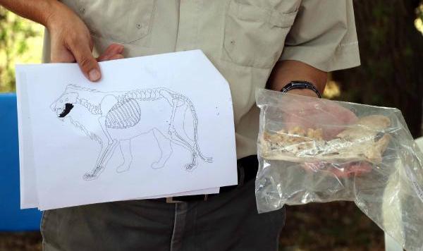 Kayseri'de aslan kemiği bulundu