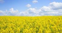 Tarımda katma değeri yüksek üretim hamlesi